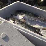 Fish_box06